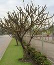 Branches garden leafless season unveil beautiful brances Stock Photo
