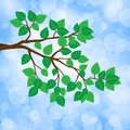 Branches green leaves with of spring illustration Stock Photos