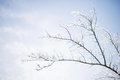 Branches in Ice Stock Photo