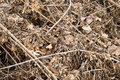 Branches and leaves dry rotten scattered in mess Royalty Free Stock Photos