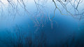 Branches reflected in blue lake misty with birch Royalty Free Stock Photos