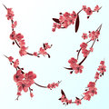 Branches of rose blossoming sakura . Japanese cherry tree. Vector Isolated icon Set Royalty Free Stock Photo