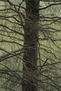 Branches in surrey forest tangle of england Royalty Free Stock Photography