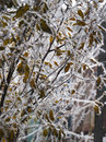 Branches of the trees in hoarfrost close up landscape nature Stock Photo