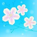 Branches with white flowers on sky background Royalty Free Stock Images