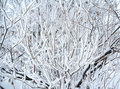 Branches of a winter tree covered by snow Stock Photo