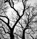 Branches on the winter of a tree in witer time Royalty Free Stock Photo
