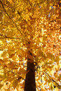 Branches of yellow Fall foliage. Stock Image