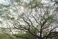 Branching tree Royalty Free Stock Photo