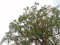 Branching of tree Royalty Free Stock Photo