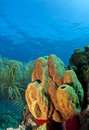 Branching tube sponge Royalty Free Stock Photo