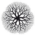 Branching (vector) Royalty Free Stock Images