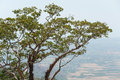 Branchy tree lonely on mountain blurred background Stock Photo