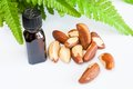 Brasil nuts bottle of oil and green leaves on white background Stock Photo