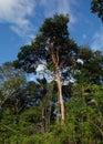 Brasilian jungle manaus rio negro Royalty Free Stock Photo