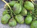 Brasilianische coconuts Agua de coco Lizenzfreie Stockfotografie
