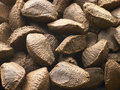 Brazil Nut Shells Royalty Free Stock Photo