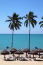 Brazil Alagoas Maceio deserted palm lined beach