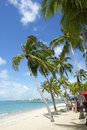 Brazilian Beach Palm Trees Maceio Nordeste Brazil