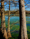 Brazos bend state park in texas Stock Photography