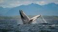 Breaching Humpback Whale, Vanc...