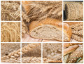 Bread and cereals collage made of pictures about Royalty Free Stock Photos