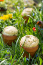 Bread in flowerpot homemade baked white on grass Royalty Free Stock Image