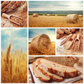 Bread and harvesting wheat Royalty Free Stock Photo