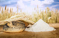 Bread and wheat cereal crops flour on the background Stock Photos