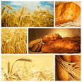Bread and wheat collage Royalty Free Stock Photo