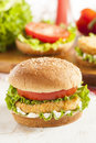 Breaded chicken patty sandwich on a bun with lettuce and tomato Stock Images