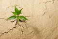 Breaking out small plant from cracked soil Stock Photography