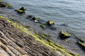 Breakwater rocks covered with green seaweed Stock Images