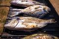 Bream sea fish on grill