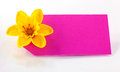 Breast cancer day daffodil Royalty Free Stock Photo