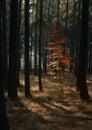 Breath of autumn Royalty Free Stock Photo