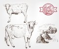 Breeding cows set of sketches made by hand Royalty Free Stock Photos