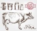 Breeding cows Royalty Free Stock Photo