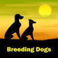 Breeding dogs shows reproducing doggy and canines indicating bred breeds Stock Images