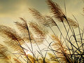 Breeze swaying the grass Royalty Free Stock Photo