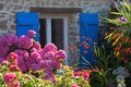 Breton stone cottage with pink Hortensia Royalty Free Stock Photo