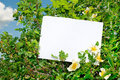Briar bush with blank paper Stock Image