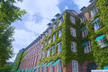 Brick building with walls covered by ivy under the summer sun. An Royalty Free Stock Photo