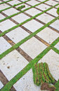 Brick and grass Royalty Free Stock Photo