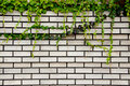 Brick With Ivy Royalty Free Stock Photo