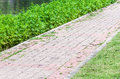 Brick path way in the garden of university Royalty Free Stock Image