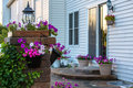 Brick patio and pillar with flowers steps covered climbing plant petunias light on the on the wall of the house Royalty Free Stock Photography