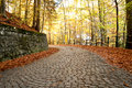 Brick road in the forest Royalty Free Stock Photo