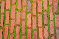 Brick roadway with young herb Royalty Free Stock Image