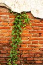 Brick in the wall Royalty Free Stock Image
